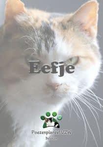 eefje